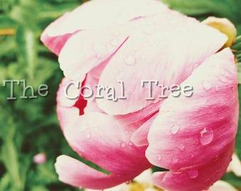 "16"" x 20"" Photo print: pink flower"