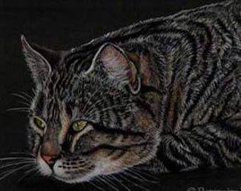 Resting Tabby Cat Art Note Card