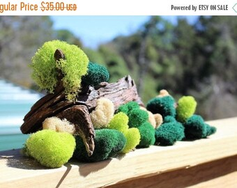 Save25% Reindeer moss-Deer foot moss-Fluffy Lichens-1 pound bag Preserved Lichens-4 Colors in assorted sized spongy soft balls