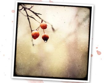 Merises - Nature - photo art signed 20x20cm