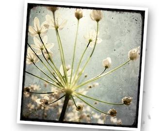 Light - Nature - photo art signed 20x20cm