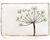 gravure originale de persil de vache Prairie