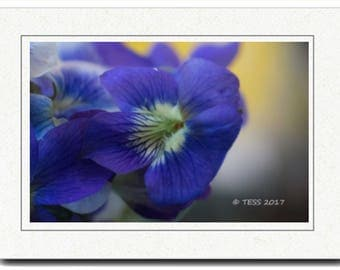 Spring Violets Photography Card - Photography Greeting Cards - Spring Blossoms Card -Wild Violets Photography Card