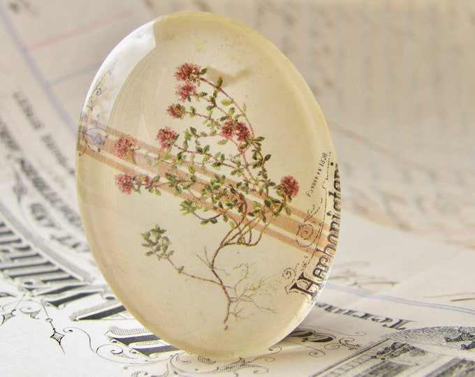 Flowering Thyme, herbs from our Vintage Kitchen collection of handmade glass oval cabochons, 40x30mm, food, cooking, herbal illustration