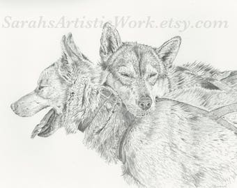 "Print of Original Drawing ""Brotherly Love"" by Sarah Marie Bevard Dogsled Art Dogsledding Alaska"