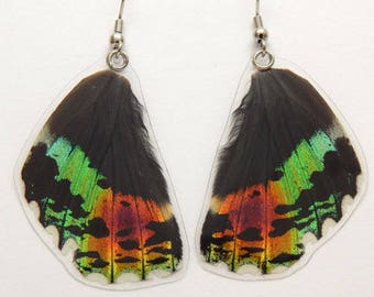 Real Butterfly Wing Earrings - Iridescent Sunset Moth