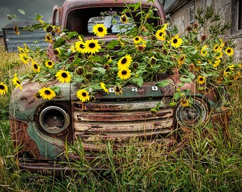 Bon Old Ford Truck, Vintage Auto, Yellow Flowers, Flower Pot, Abandoned Truck,