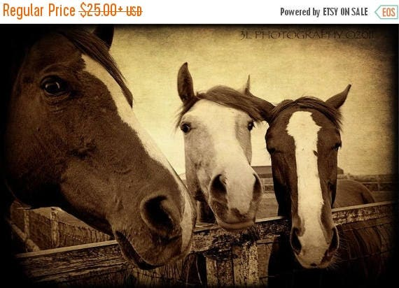 On sale horse photography western art rustic southwestern home - Home interior horse pictures for sale ...