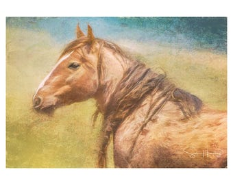 Montie - Painting - Wild Mustang of Sand Wash Basin, Wild Horse Painting, sand wash basin wild horses, Colorado stallion