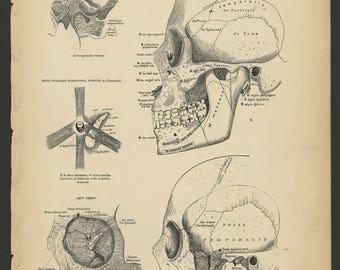 4 Vintage 1880 Human Anatomy Lithograph Print Skull, Brain, Eye, Nerves
