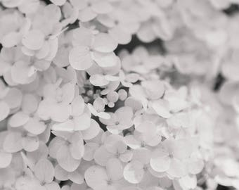 Hydrangea Flower Photography, Black and White, Dreamy Abstract Garden Print Wall Art Photo Feminine Elegant Decor Nature Floral Still Life