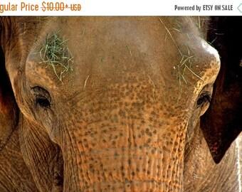 On Sale Asian Elephant, Tucson, AZ, Nursery