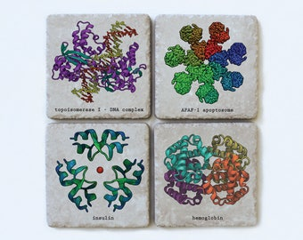 Protein Structure, Ceramic Science Coasters, Set of 4, Biochemistry, Proteomics Gift