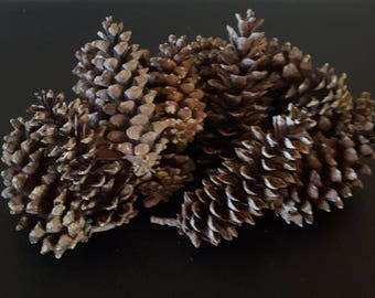 14 Large Pine cones/ pinecones/ wreath supplies/ natural supplies/ destash lot / craft supplies/ seasonal/ christmas decoration