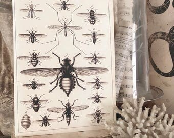 Vintage INSECT CHART Wood Sign Print Farmhouse Decor Page Wall Art Print  Fixer Upper Primitive Diagram Natural History Rustic Decor