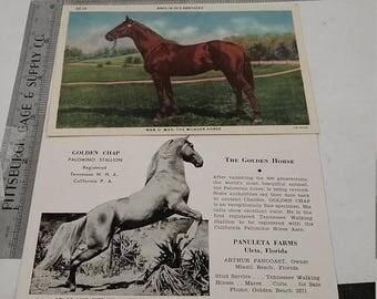10% OFF 3 day sale Lot of 2 vintage Horse postcards Man o war unused.