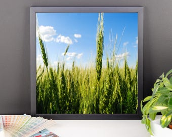 Framed photo paper poster - Red Silo Original Art - Green Wheat