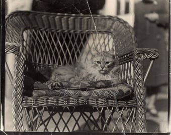 Victorian pet cat ~ Vintage Snapshot Photo