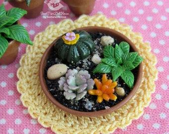 Miniature cactus and succulents in the pot. Mini Cacti. Garden. Succulents. Dollhouse Plant. The Fairy garden. Accessory