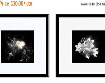 ON SALE Black and White Photos, Fine Art Photography, 2 Print Set, Bluebells