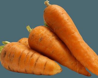 Carrot seeds 200+