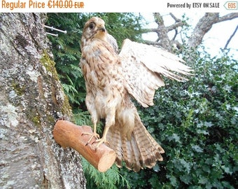 SALE 15% OFF Vintage French Hawk Mounted Bird - Open Wings