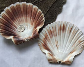 Pair of Scottish Scallop Shell Bases SS 23.7.17.2