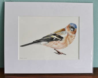 Chaffinch Bird Watercolour Painting - Garden Bird - Mounted Chaffinch giclee print - Bird Art Poster - Picture and gift for the home