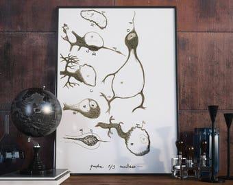 Santiago Ramon Cajal's Damaged Purkinje Neurons of the Cerebellum , Science Art, Science Poster, Medical student gift idea, Neurology