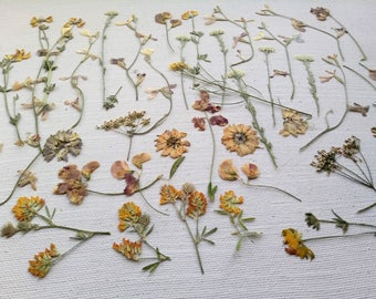 Jewelry Accessories Herbarium Scrapbooking Pressed Dried flowers Set for carpets Dry Jewelry Flowers for making Jewelry designe