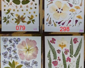 Pressed flowers, dried flowers, pressed leaves, dried leaves, pressed petals dried petals perfect scrap booking. #079 #298 #313 #393