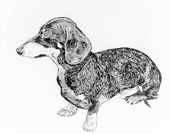 Dachshund Art, Dachshund Drawing, Dachshund Sketch, Dog Art, Dog Drawing, Doxie Art