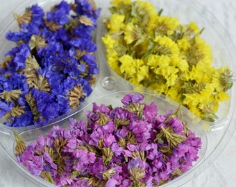 Dried limonium flowers, preserved statice flowers, yellow  blue pink limonium flower heads, dried flowers, preserved flowers
