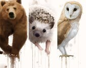The Forest Animals 2.0 Collection