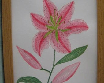 Watercolour original painting of a Pink Stargazer Lily
