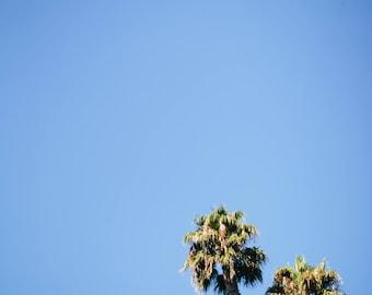 Palm Trees in San Luis Obispo California