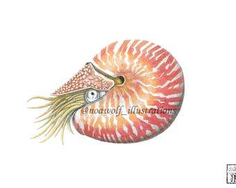 Nautilus art - Nautilus drawing - Nautilus painting - Nautilus artwork - Nautilus decor - Biology marine - Nature art - animal art