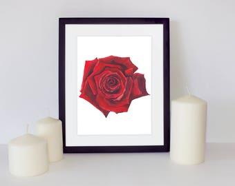 Red Rose Printable art, Rose Watercolor, Botanical Print, Watercolor flower, Watercolor painting, Wall Art, Pintable Art Home, Floral print