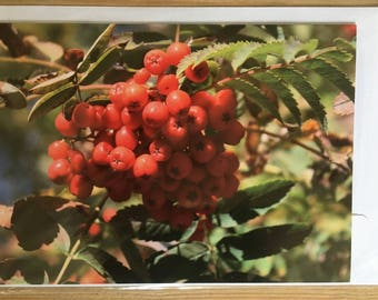 Red berries greetings card blank for your own message