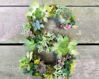 succulent letter monogram // wall art // housewarming gift