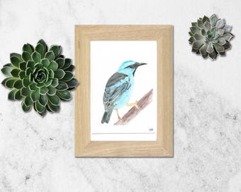 Watercolor blue & Black bird