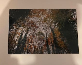 Autum Trees photo 12X8 in a mounted white frame