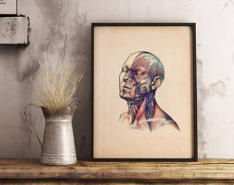 Human Head and Neck Anatomy Vintage Print - Anatomy Illustration - Printable Art - Instant Download
