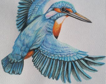 Watercolor Kingfisher/Original image/15.5 × 16inch