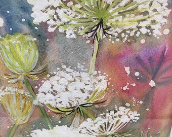 Original watercolour of  Queen Anne's Lace (Darius carota)