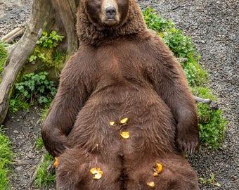 Digital Download Photograph, Brown bear enjoying some tangerines.