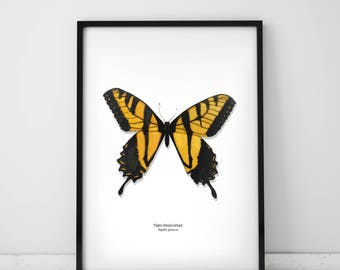 Yellow Tiger Swallowtail Butterfly Archival Print A4