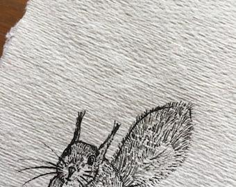 Squirrel   Hand-drawn unique