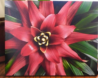 Red Bromeliad PhotographGiclee on canvas