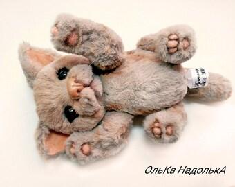 cat Baiyun. Teddy's friends